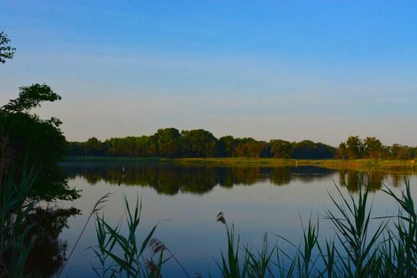 Marsh Pond 14