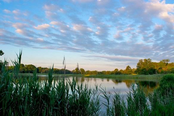 Marsh Pond 17