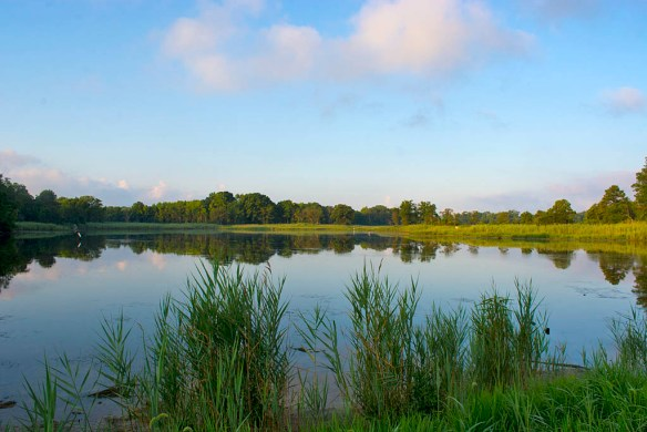 Marsh Pond 22