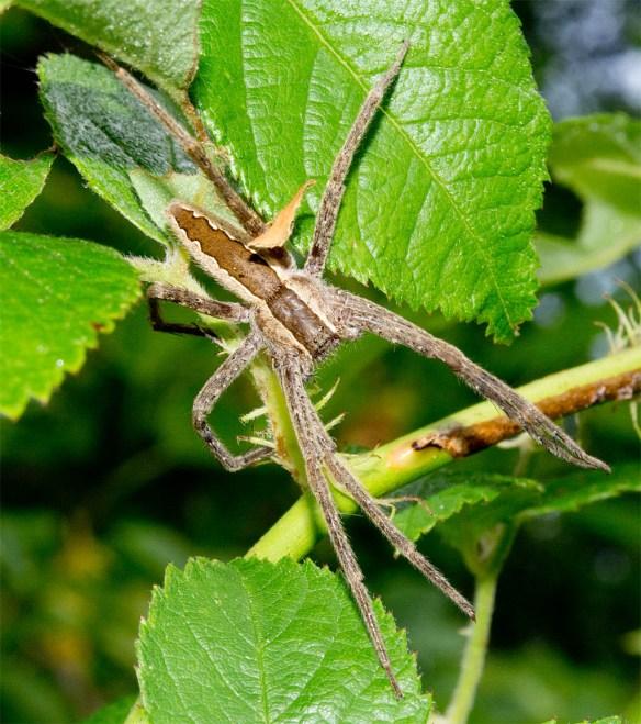Spider 269