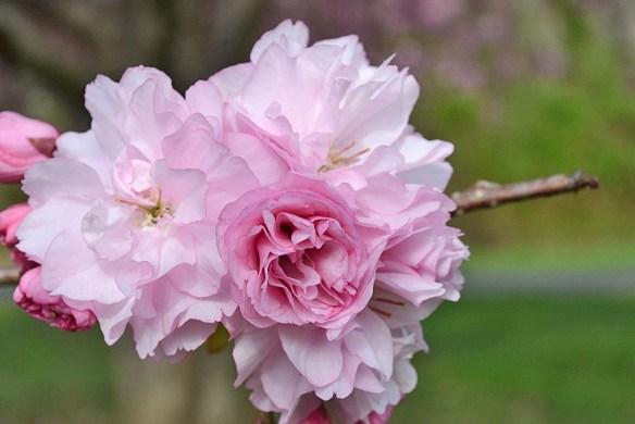 Flower 93