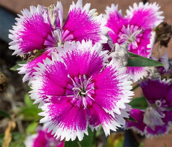 Flower 95