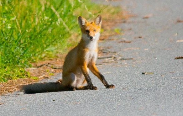 Fox 74
