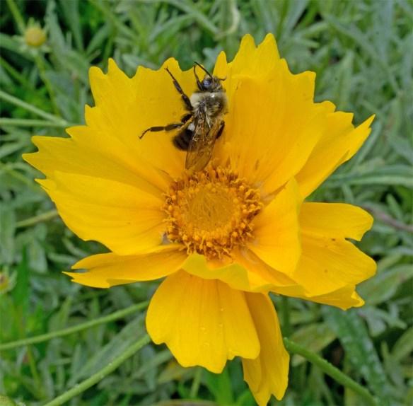 Flower 101