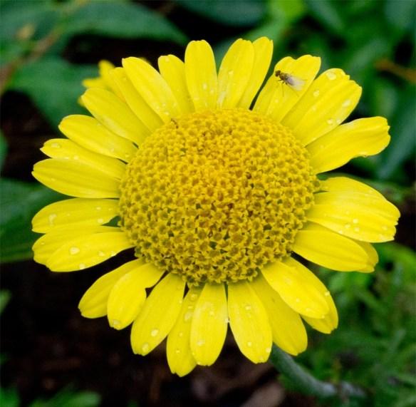 Flower 102