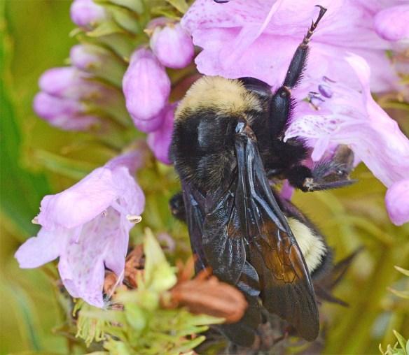 Bee 233