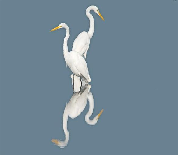Great Egret 2017-95