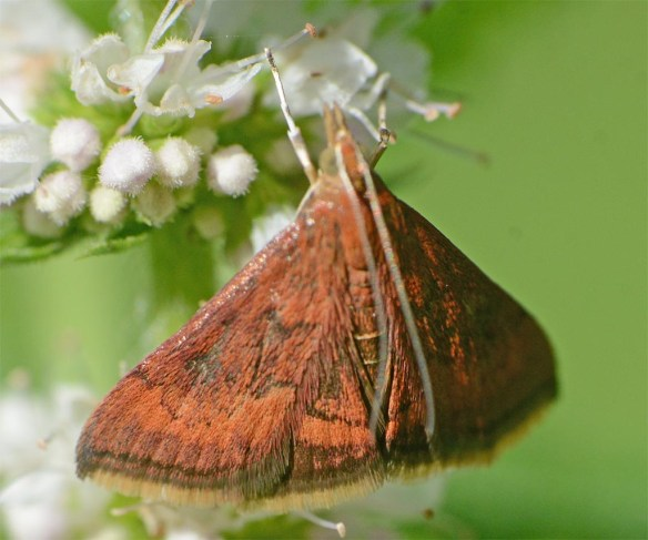 Moth 221