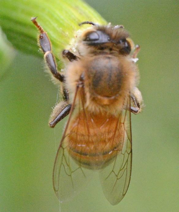 Bee 234
