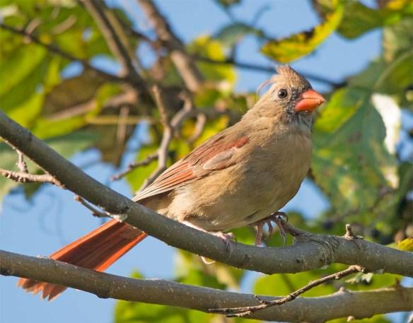 Cardinal 2017-17