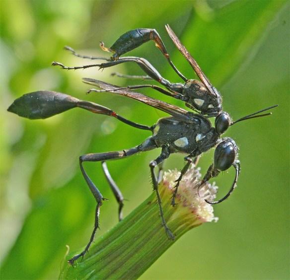 Wasp 33