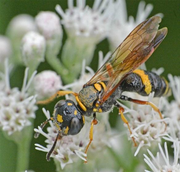 Wasp 39