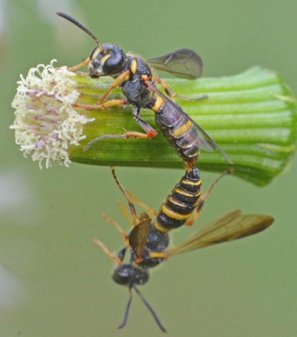 Wasp 42