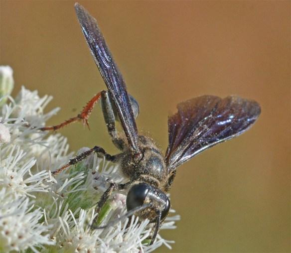 Wasp 43