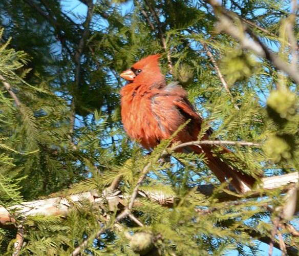 Cardinal 2017-18