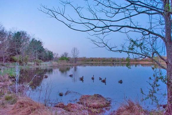 Lake Artemesia 101