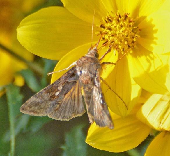 Moth 226