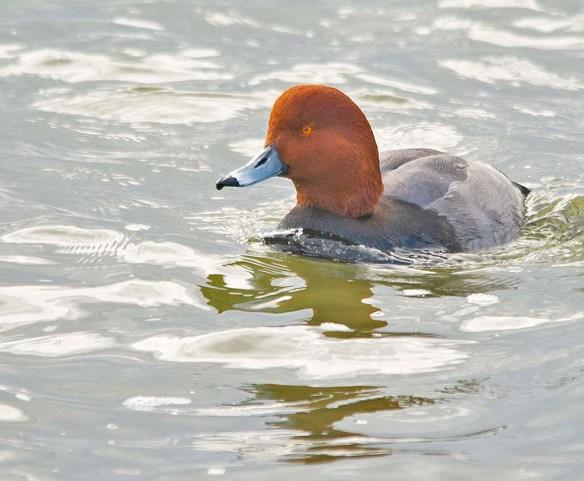Redhead 2019-1