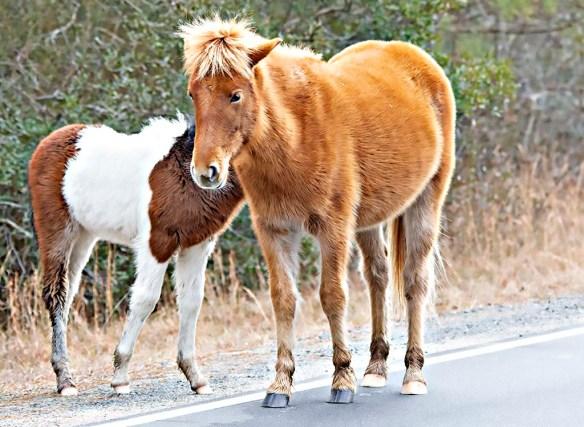 Pony 2019-2