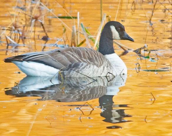 Canada Goose 2019-38