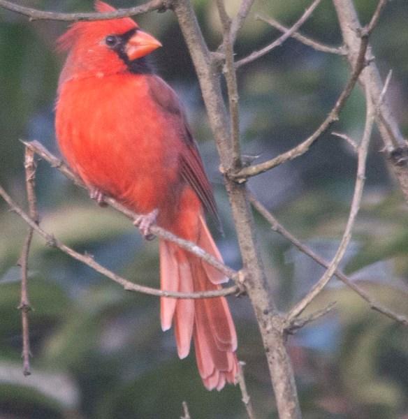 Cardinal 2020-10