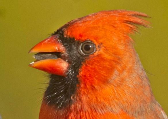 Cardinal 2020-21