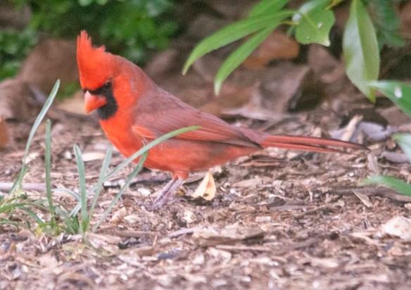 Cardinal 2020-30