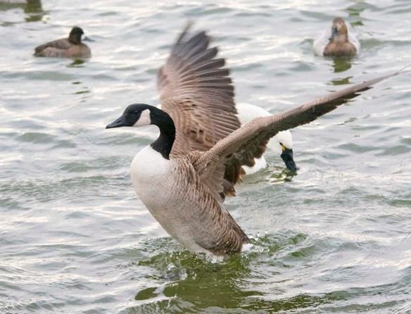 Canada Goose 2021-27