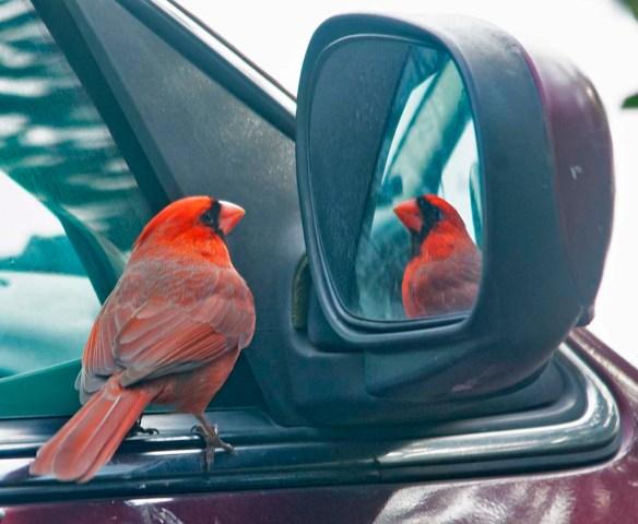 Cardinal 2021-1