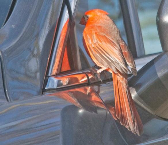 Cardinal 2021-3