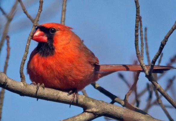Cardinal 2021-22