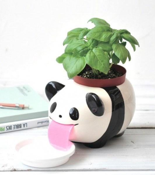 plante-a-faire-pousser-papa-peropon