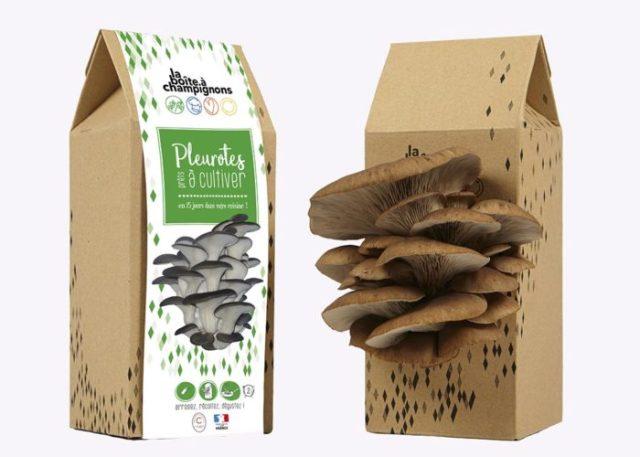 kit-faire-pousser-champignons-pleurotes-vue-face
