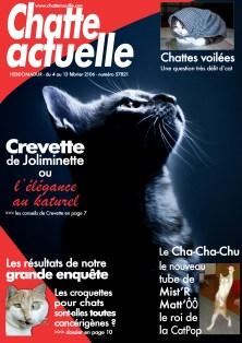 chatteActuelle2