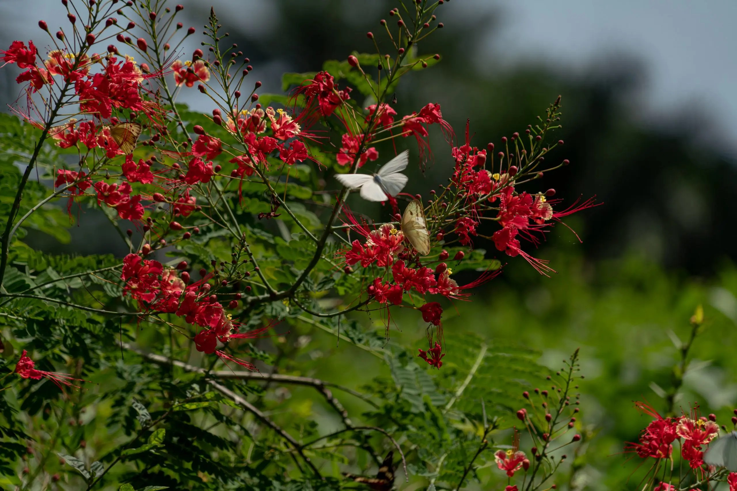 Diversidad biológica, mariposa en flores. Hugo Molina Botran