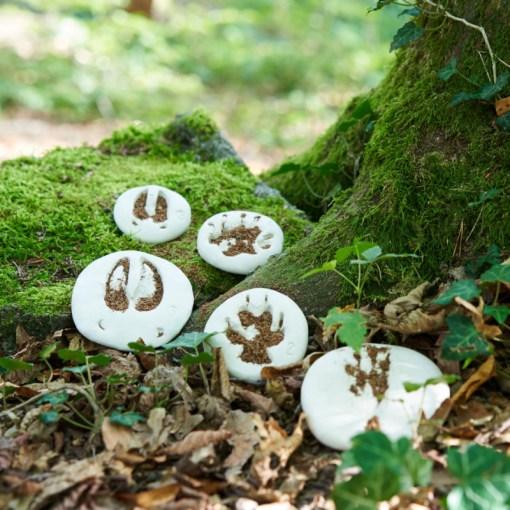 Erkenne Pfotenabdrücke am Wald-Kindergeburtstag