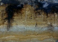 De lichtkleurige vlekjes in het zand zijn doorsneden van graafgangen van mestkevers. Bij bodemkundigen en amateurgeologen staan deze ronde en vingervormige doorsneden bekend als 'vingers van Hoeksema'. Ir. K.J.Hoeksema was een bekend bodemkundige in Wageningen en noemde deze structuren die over in Nederland in hoger legen zandgebieden voorkomen'vingers'.