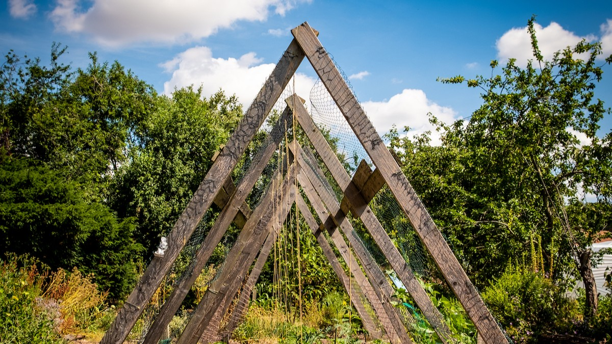 A wooden climbing frame stands against a bright blue sky.