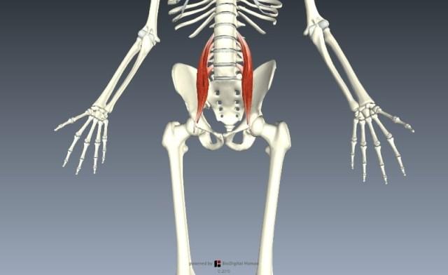 BioDigital Human