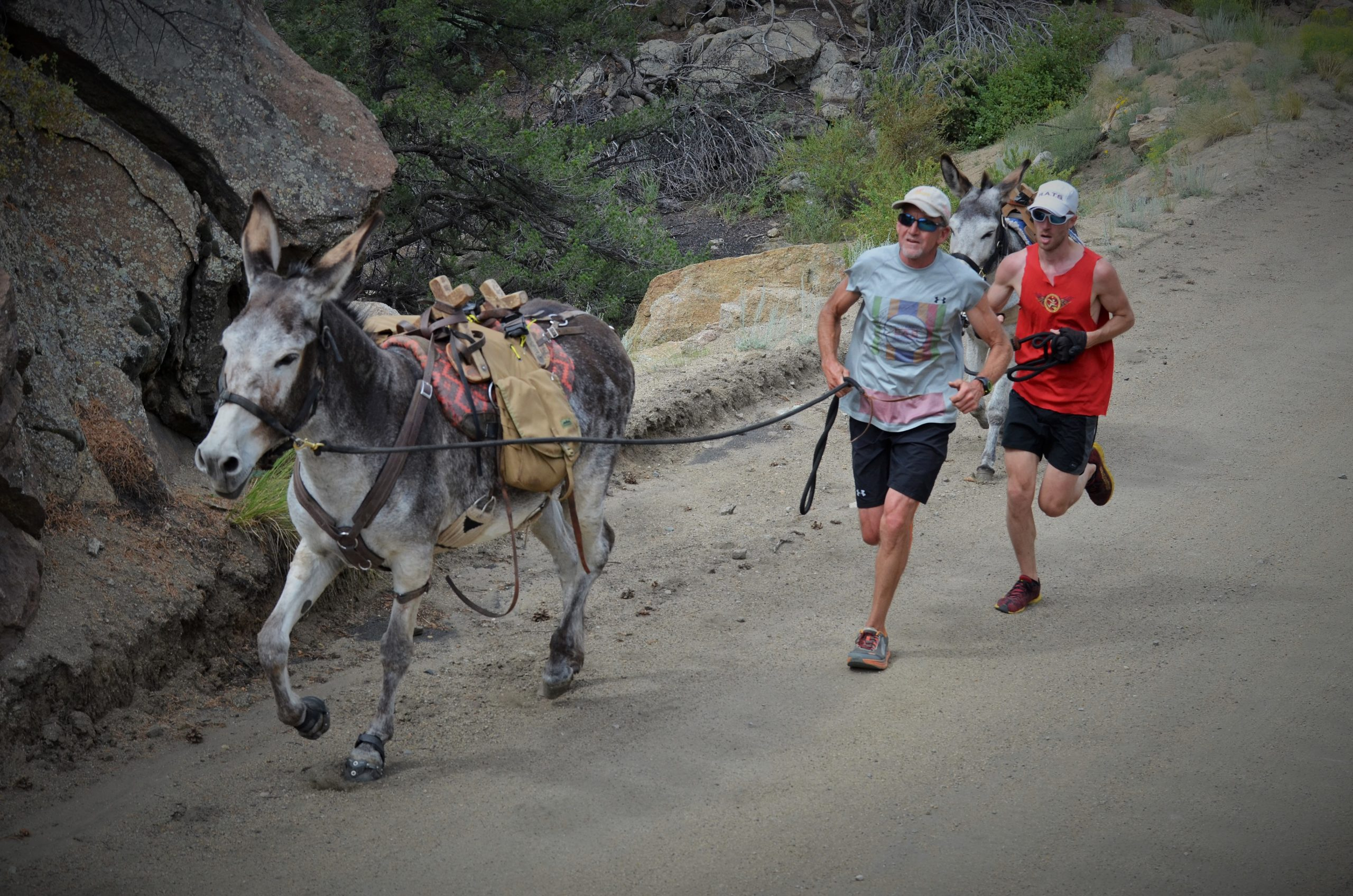 Hal Walter proving that an old burro racer can still beat elite marathoners.