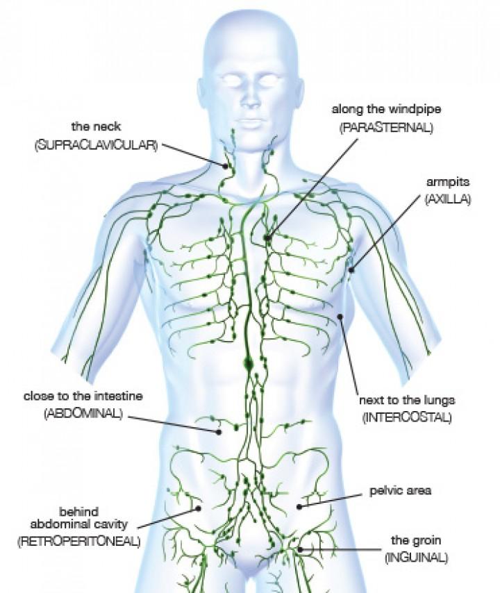 Lymphatic system lymph
