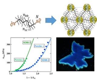 Polymer that mimics a chameleon