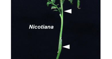 Scientists find an enzyme that facilitates grafting between different family species