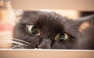 Kitty Cujo: What just happened?