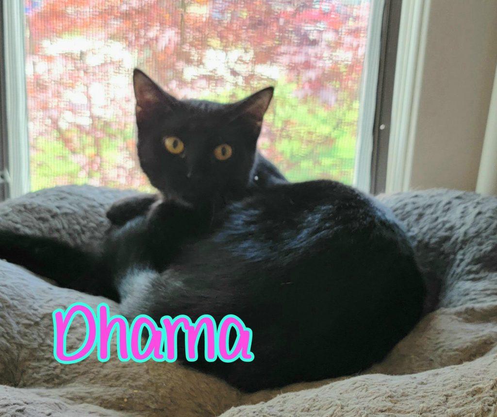 Dharma: Female, All Black. DOB: 07/01/2020