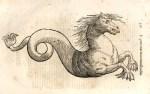 Equus marinus monstrosus. In Ulisse Aldrovandi, Monstrorum historia cum Paralipomenis historiae omnium animalium.
