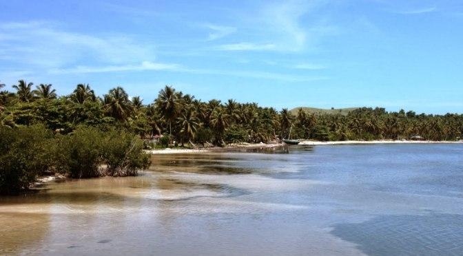 phot de plage avec cocotiers a Pristine, Ile à vache