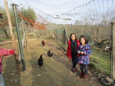 Hens on the Farm