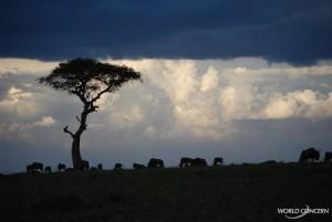 Silhouette of Kenya Africa