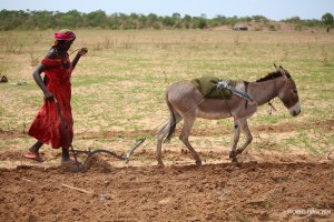 A woman plows a field in Chad
